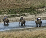 Elephant Safari, Corbett
