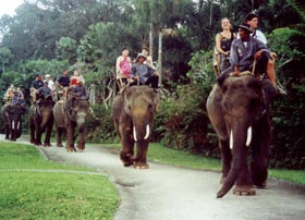 Elephant Safari in Corbett National Park