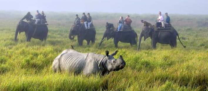 Indian Rhino Safari