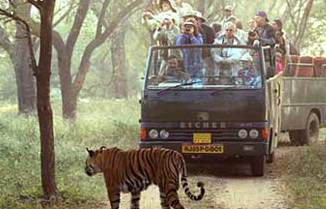 Canter Safari, Corbett