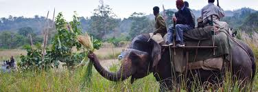 elephant safari, Package Tour Golden Triangle