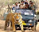 Jeep Safari, Delhi and Corbett Tour