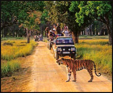 Jeep Safari, Kanha
